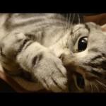 【ネコノミクス】猫の動画を見始めると止まらなくなる不思議(笑)